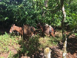 fazenda Bonança transporte de cacau